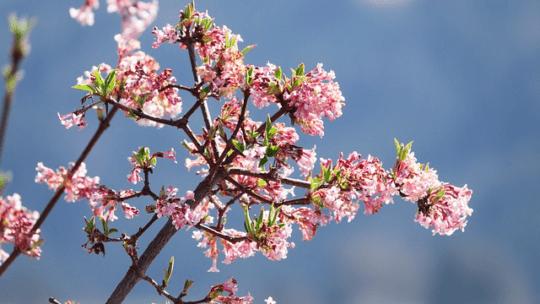 Anlæg din have efter klimaet