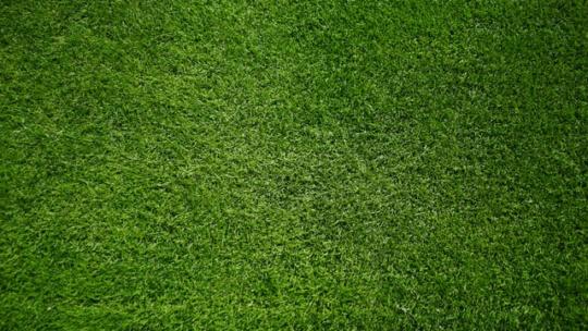 Skal du købe rullegræs til haven?